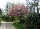 Blütenbaum im Grünen Zentrum von Lohbrügge